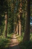 Caminho nas madeiras ao lado dos campos cultivados na luz do fim da tarde, em seguida a vila de Damme imagem de stock royalty free