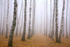 Caminho no bosque do vidoeiro da névoa imagens de stock