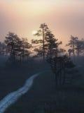 Caminho no pântano de Kakerdaja Imagem de Stock