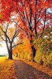Caminho no parque do outono Fotografia de Stock Royalty Free