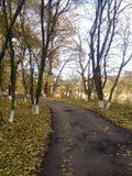 Caminho no parque do outono Fotografia de Stock