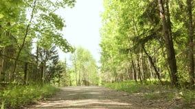 Caminho no parque Tiro constante liso e lento da came Dia limpo e brilhante filme