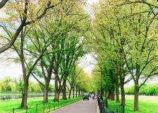 Caminho no parque no Washington DC do National Mall fotografia de stock royalty free