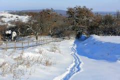 Caminho no prado no tempo de inverno Imagem de Stock