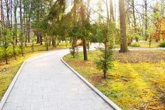 Caminho novo e trilha bonita das árvores para correr ou andar e dar um ciclo para relaxar no parque no campo de grama verde no pa imagem de stock