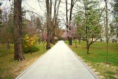 Caminho novo e trilha bonita das ?rvores para correr ou andar e dar um ciclo para relaxar no parque no campo de grama verde no pa fotos de stock