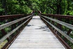 Caminho que conduz na floresta Imagem de Stock