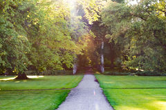 Caminho reto que entra na floresta com raios de sol Foto de Stock