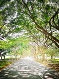 Caminho sob árvores