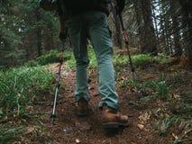 Caminho Trekking através da madeira em montanhas de Carpathians Imagens de Stock Royalty Free