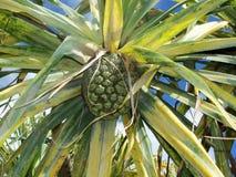Caminho tropical Fotos de Stock
