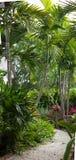 Caminho tropical do jardim imagens de stock
