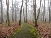 Caminho verde Fotografia de Stock