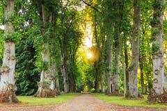 Caminho verde da floresta com os raios de sol bonitos que vêm completamente Imagem de Stock Royalty Free