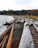 Caminhos da madeira lançada à costa Foto de Stock