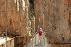 Crossing cliffes by a hanging bridge with calbes stock photo