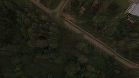 Camino aéreo de la visión panorámica y bosque enorme del pino metrajes