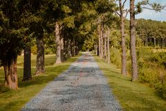 Camino abajo de una trayectoria enselvada en Virginia Foto de archivo