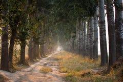 Camino abierto del árbol fotos de archivo libres de regalías