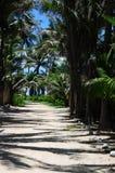 Camino abrigado por las palmeras Imagen de archivo