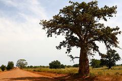 Camino africano Imagen de archivo libre de regalías