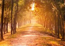Camino al árbol de la montaña al lado del camino Fotos de archivo libres de regalías
