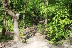 Camino al bosque fotos de archivo