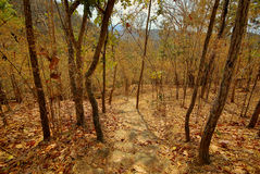 Camino al bosque Imagen de archivo
