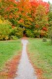 Camino al bosque Imágenes de archivo libres de regalías