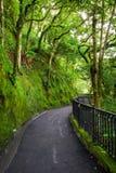 Camino al bosque, camino del lugard, Hong-Kong imagenes de archivo