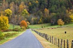 Camino al lado del pasto de la vaca Imágenes de archivo libres de regalías