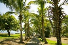 Camino al Océano Pacífico a través de un parque con las palmas imagenes de archivo