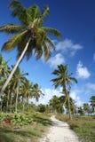 Camino al paraíso Imagen de archivo libre de regalías