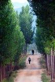 Camino alineado árbol Fotos de archivo libres de regalías