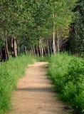 Camino alineado árbol Imagenes de archivo