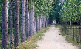Camino alineado árbol Fotos de archivo