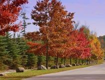 Camino alineado árbol Foto de archivo