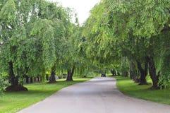 Camino alineado árbol de la bobina fotos de archivo