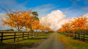 Camino alineado árbol en otoño fotografía de archivo