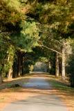 Camino alineado árbol largo Fotografía de archivo libre de regalías
