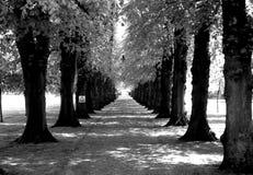 Camino alineado con los árboles Imágenes de archivo libres de regalías