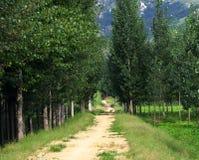 Camino alineado del árbol de álamo Imagen de archivo