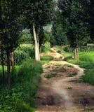 Camino alineado del árbol de álamo Foto de archivo