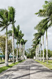 Camino alineado palma Fotos de archivo libres de regalías