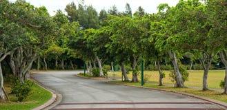 Camino alineado árbol Foto de archivo libre de regalías