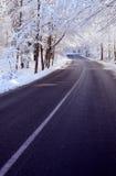 Camino alineado árbol en invierno Foto de archivo libre de regalías