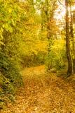 Camino amarillo Fotografía de archivo