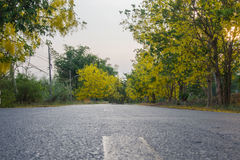 Camino amarillo del flor foto de archivo libre de regalías
