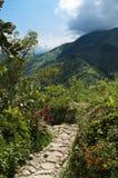 Camino andino del gardenand Imagen de archivo