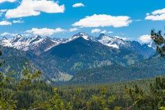 Camino apartado escénico de los pinos ponderosa, Idaho Foto de archivo libre de regalías